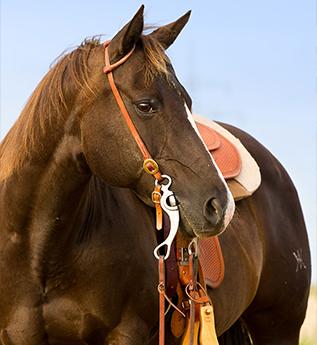 konie pod siodło